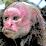geru vino's profile photo