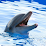 Marineland Dolphin Adventure's profile photo