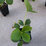 Gardening 2010 - 101_0209.JPG