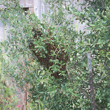 Gardening 2010, Part Three - 101_5345.JPG