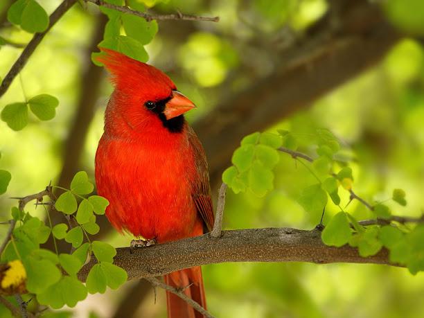 фотография птиц