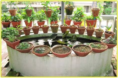How to grow vegetables on your terrace and balcony what for Terrace kitchen garden
