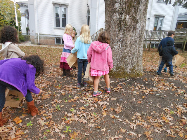 2013 - Learning About Leaves - Learning%2Babout%2Bleaves%2BMNHM%2BOct.%2B2013%2B003.JPG