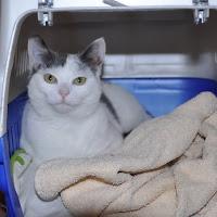 2013-1 gatti