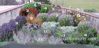 Angoli di giardino con piante profumate e fiorite for Foto angoli giardino