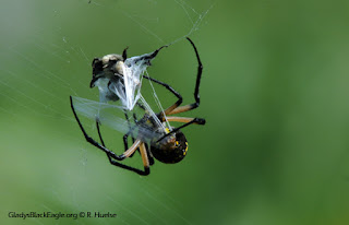 A liquid silk emerges from the spider's spinnerets and hardens when it is exposed to air. There are different kinds of silk for different uses.