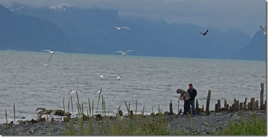 Seward Waterfront Park, clean fish, birds will come