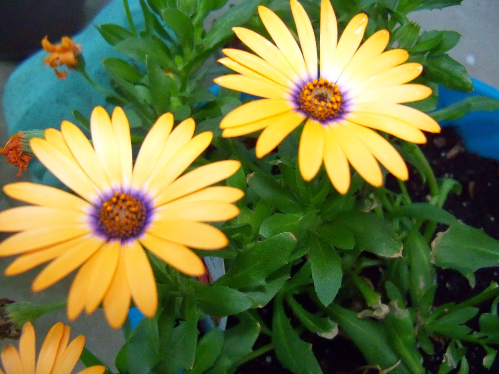 Gardening 2015 - 116_7626.JPG
