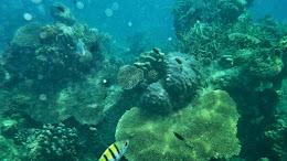 ngebolang-pulau-harapan-5-6-okt-2013-pen-14