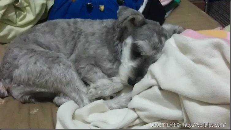 CoCo睡姿-3