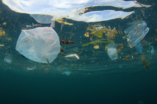Underwater view of floating plastic debris. Every year, millions of tonnes of plastic debris ends up in the sea -- a global environmental problem with ecological consequences. Photo: Richard Carey / fotolia