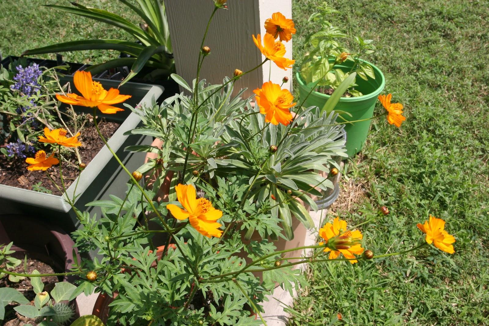 Gardening 2012 - IMG_3793.JPG