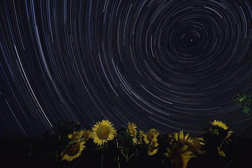 星とひまわりの共演