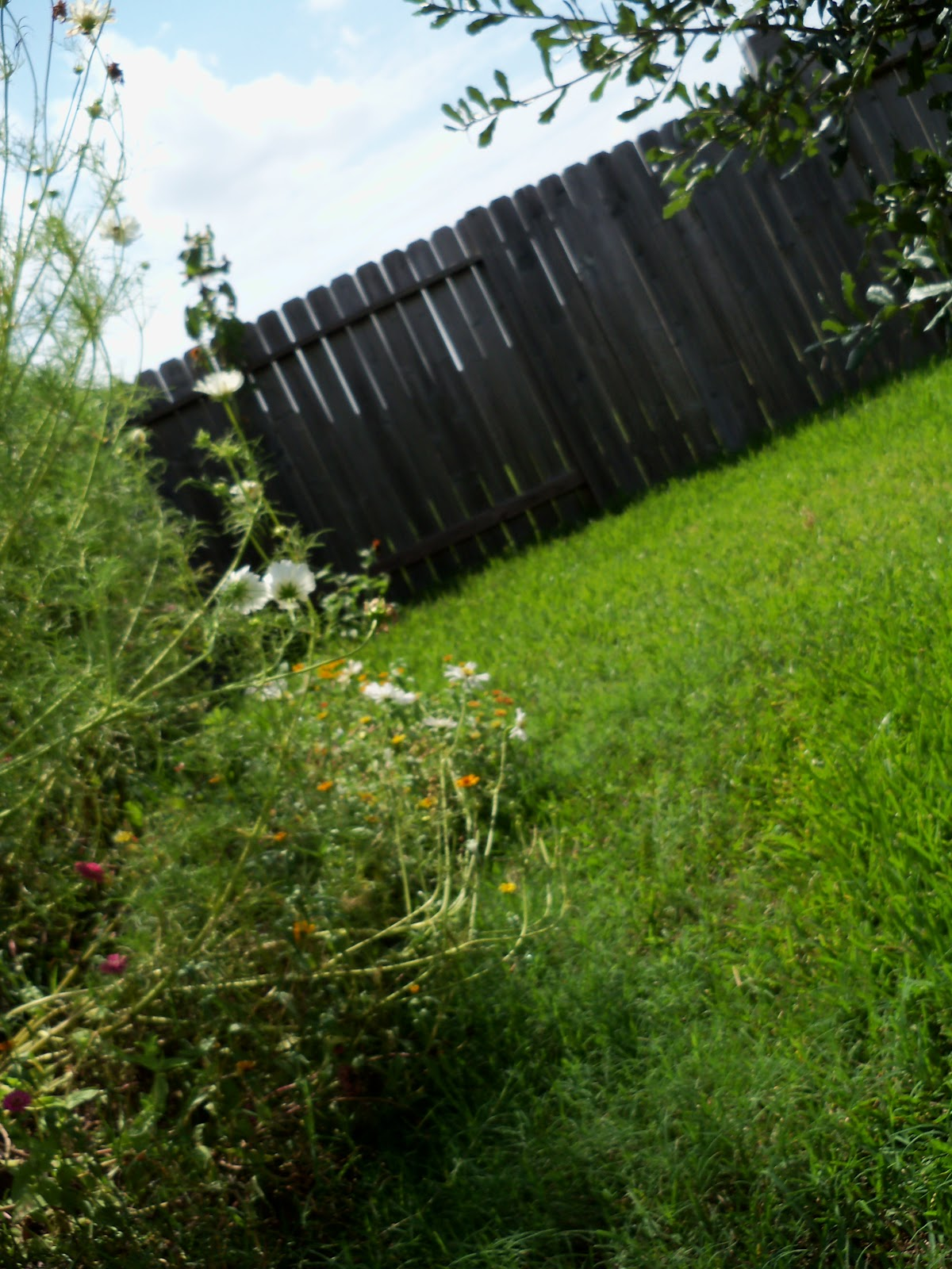 Gardening 2010, Part Three - 101_5082.JPG