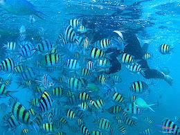 pulau harapan, 6-7 juni 2015 samsung gopro be 24