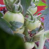 Gardening 2012 - 115_1612.JPG