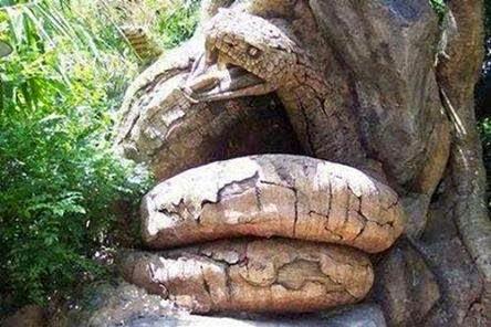 นางงูเหลือมกลับชาติมาเกิด