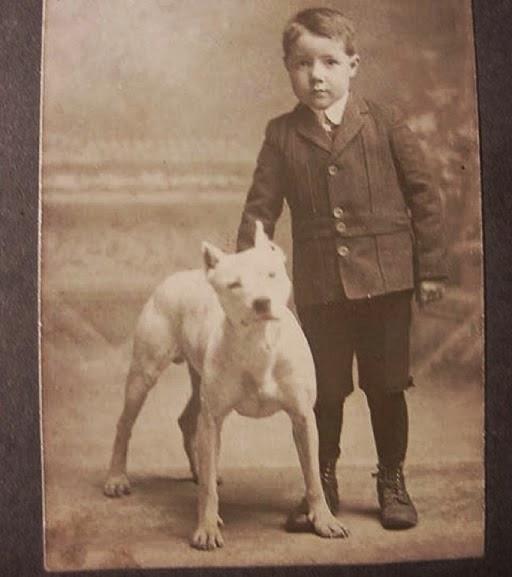 Um Pit Bull e menino