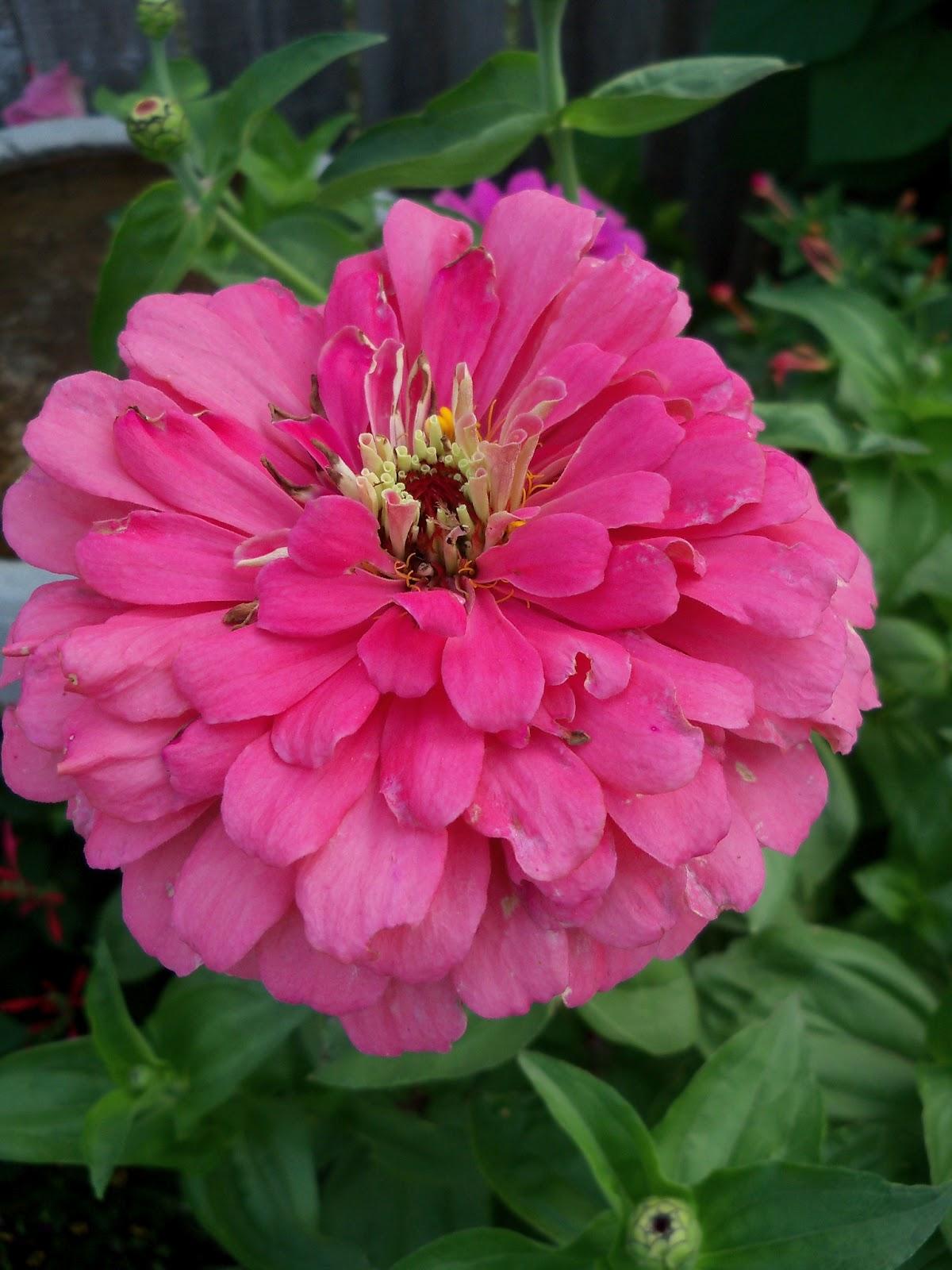 Gardening 2011 - 100_8196.JPG