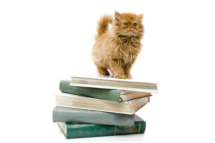 книги котки