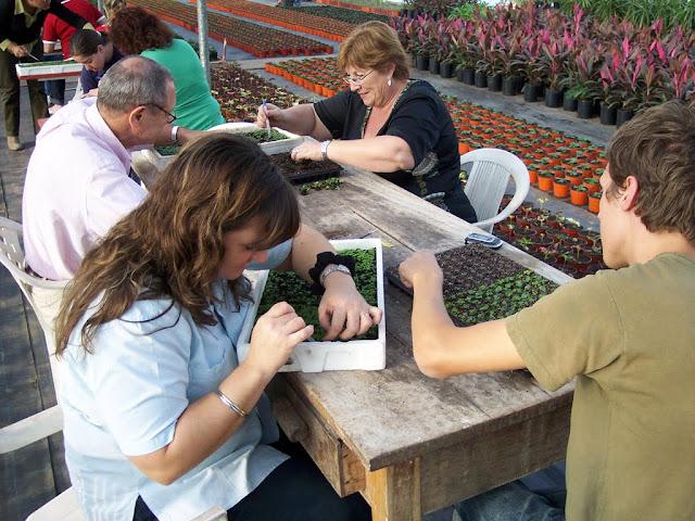 cultivo de plantas florales anuales - backup%2Bcamara%2B140.jpg