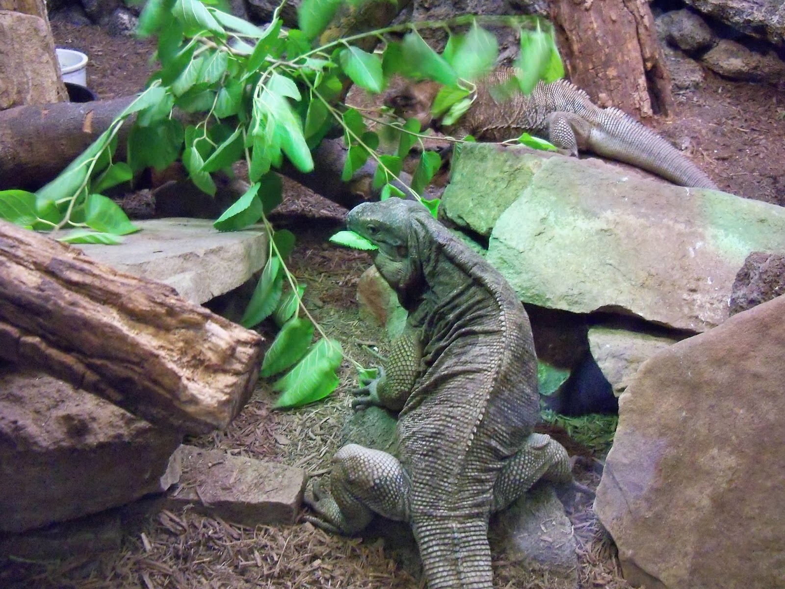 Houston Zoo - 116_8404.JPG