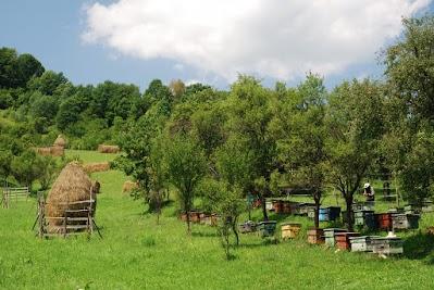 Bienenstöcke zwischen Glod und Barsana