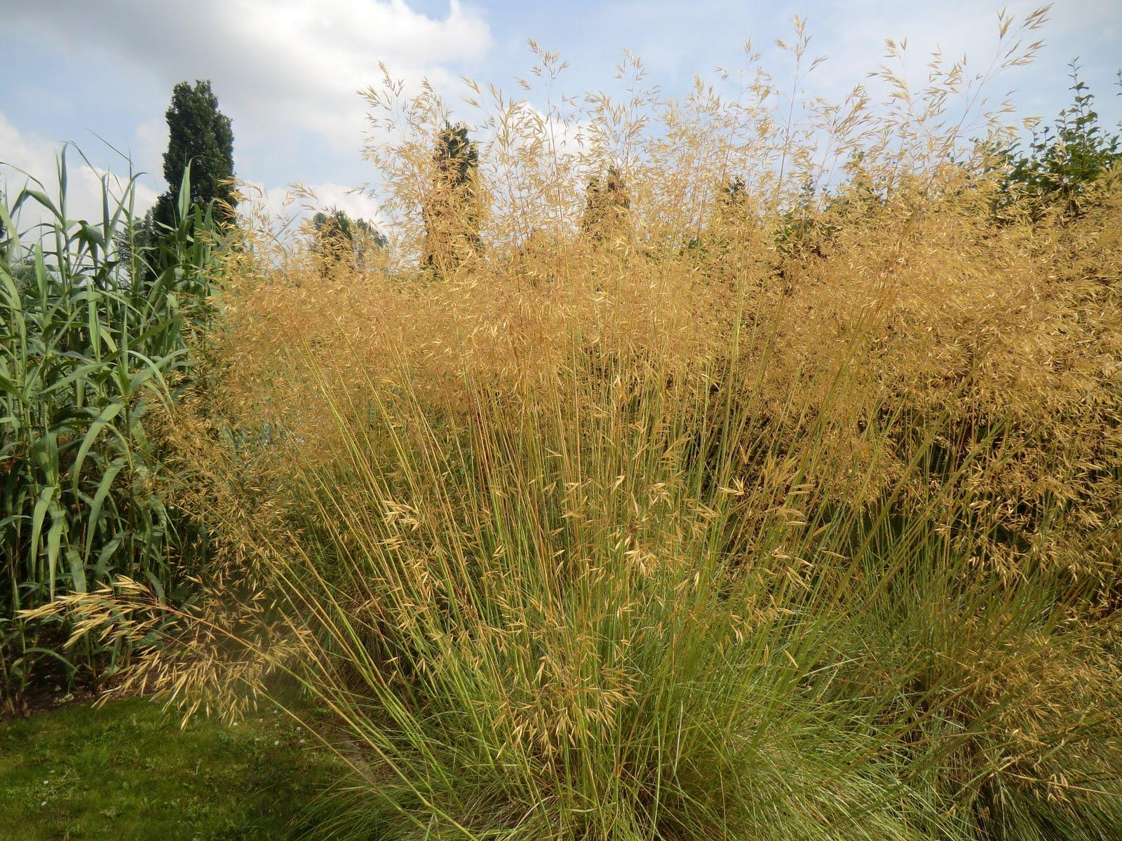 CIMG2743 Grasses Garden, Broadview Gardens