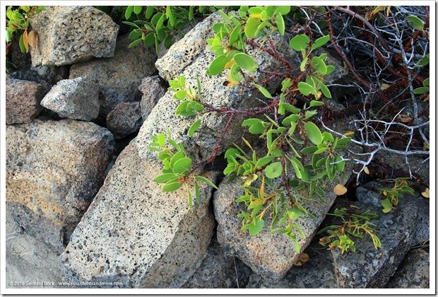 160806_Weed_LivingMemorial_017_thumb