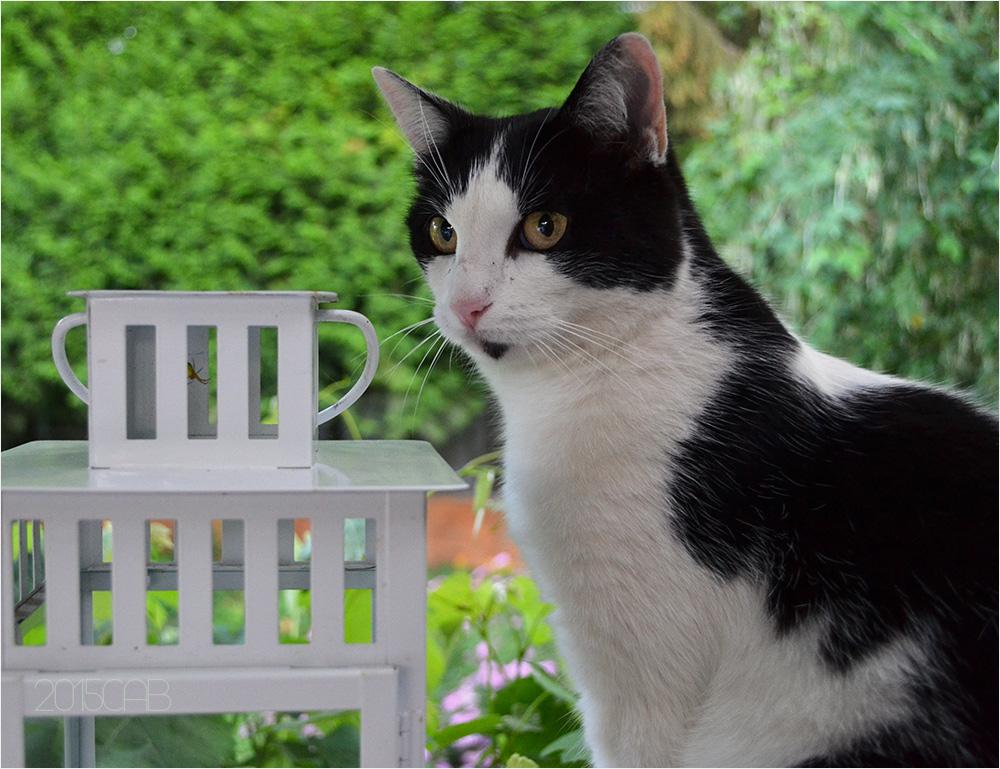 Testclod chat noir et blanc l 39 ombre du jardin for Jardin noir et blanc
