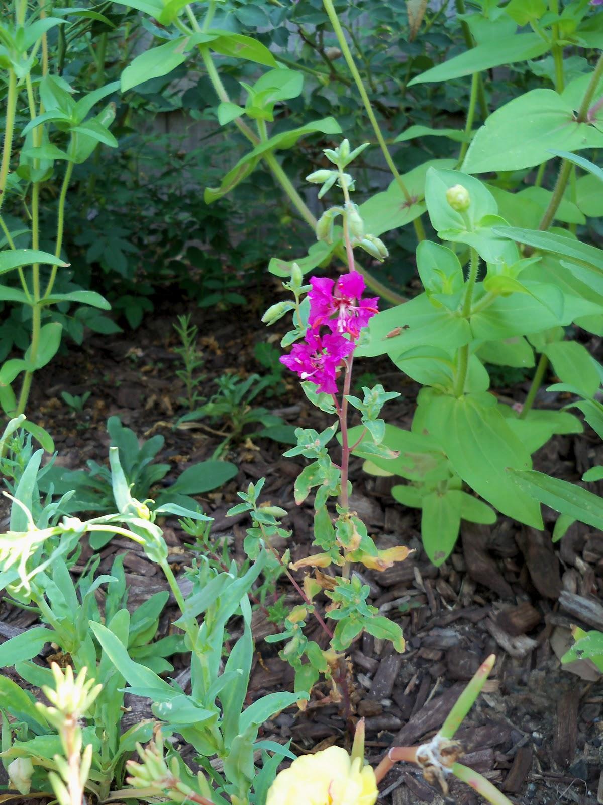 Gardening 2010, Part Two - 101_3026.JPG