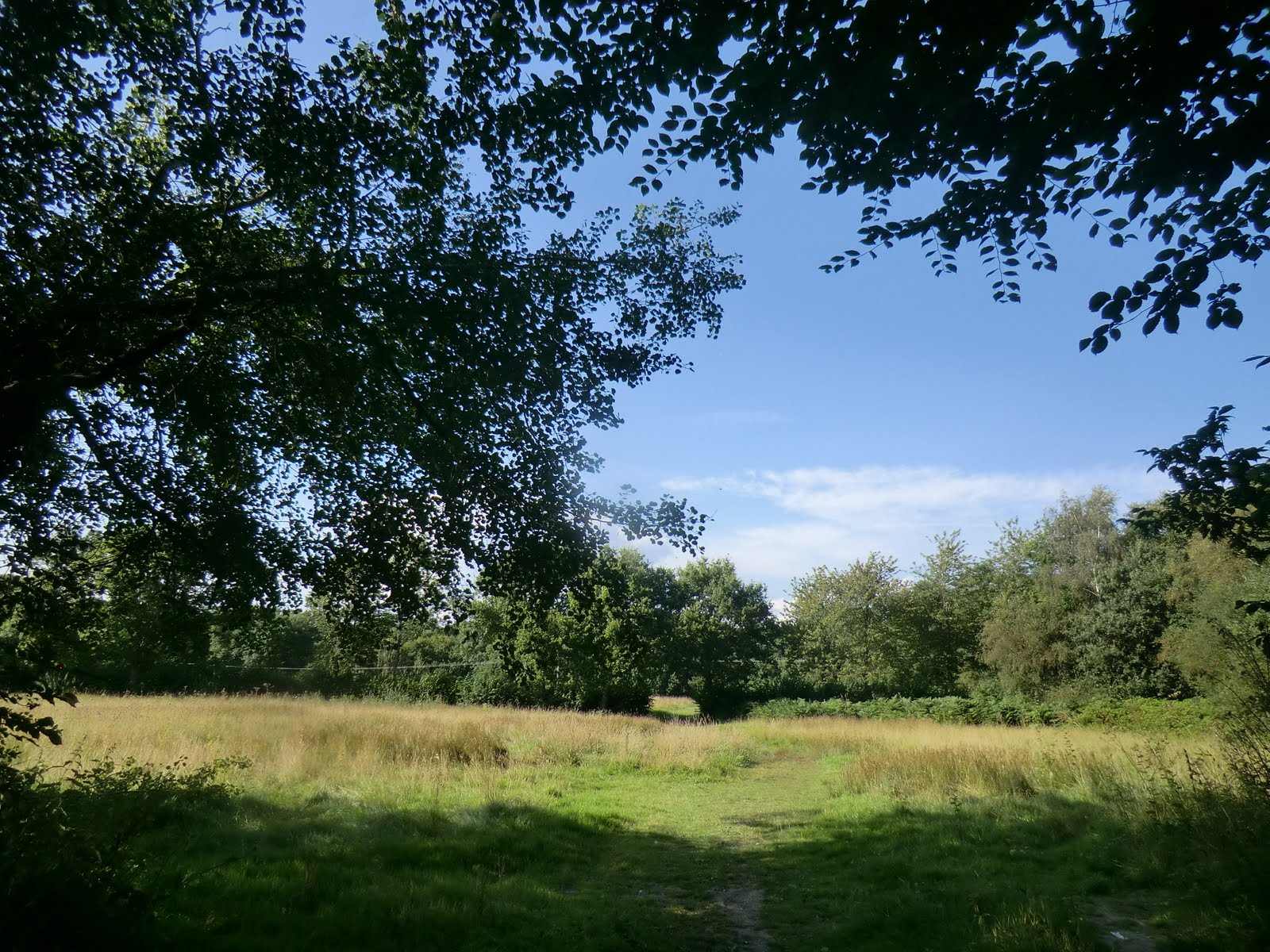CIMG4161 Across a meadow, Bedelands Farm Nature Reserve