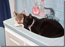multi-cat sink