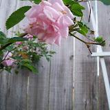 Gardening 2011 - 100_6958.JPG