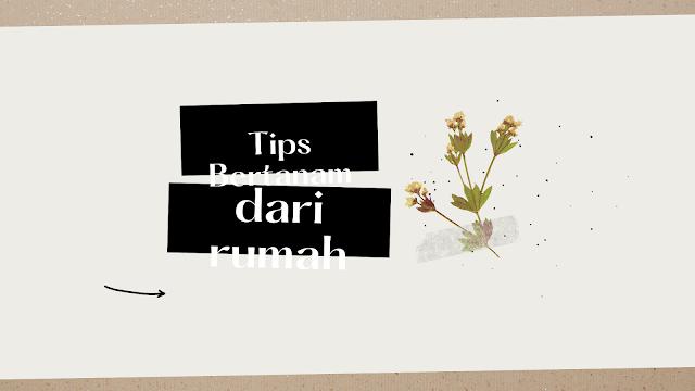 tips bertanam dari rumah