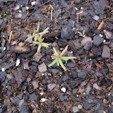 Gardening 2010 - 101_0310.JPG