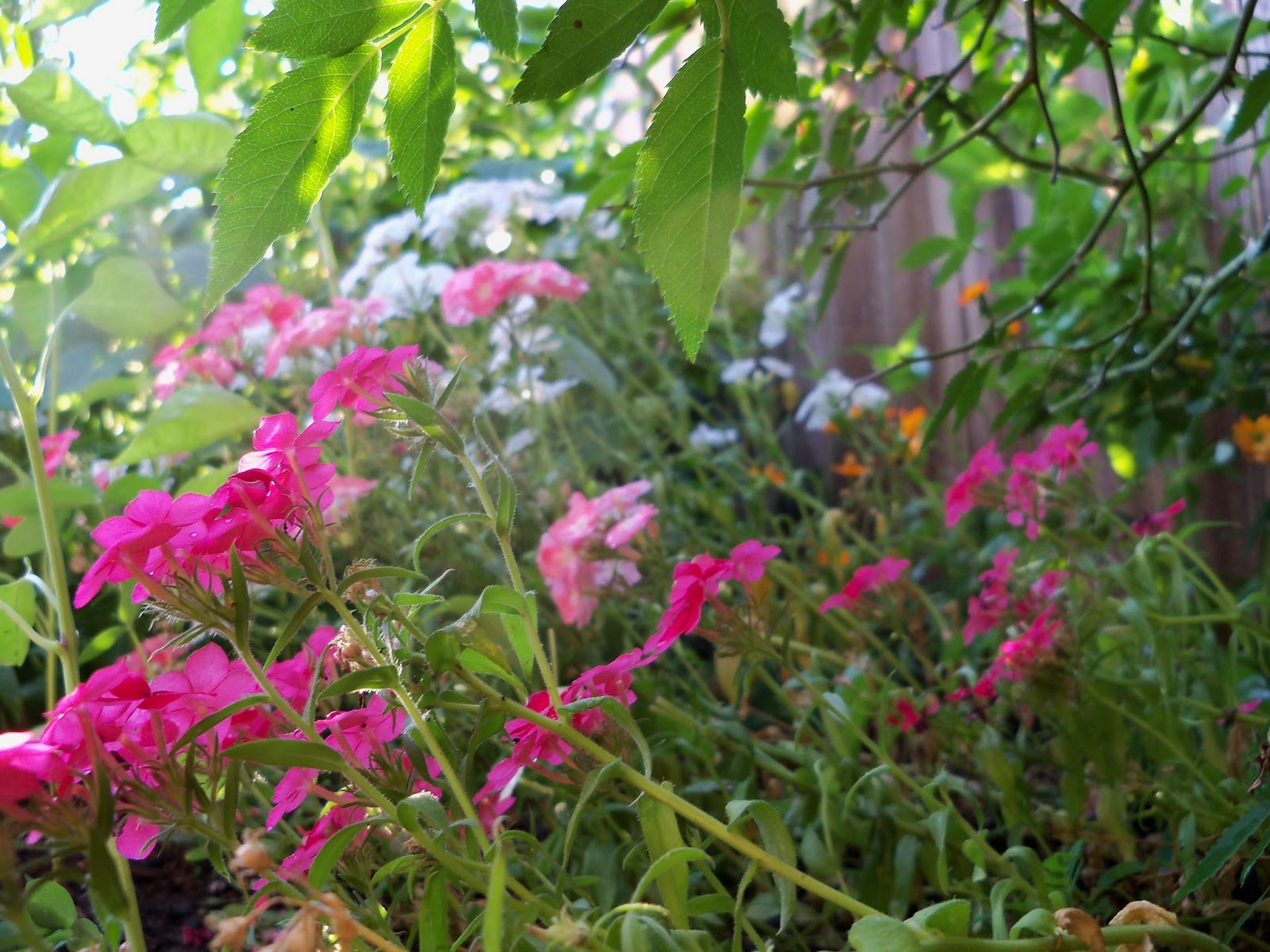 Gardening 2012 - 115_2650.JPG