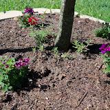 Gardening 2010 - 101_1324.JPG