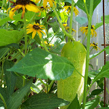 Gardening 2010, Part Three - 101_5079.JPG