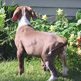 Jasper- born on 4/2/2010 - IMG_1428.JPG