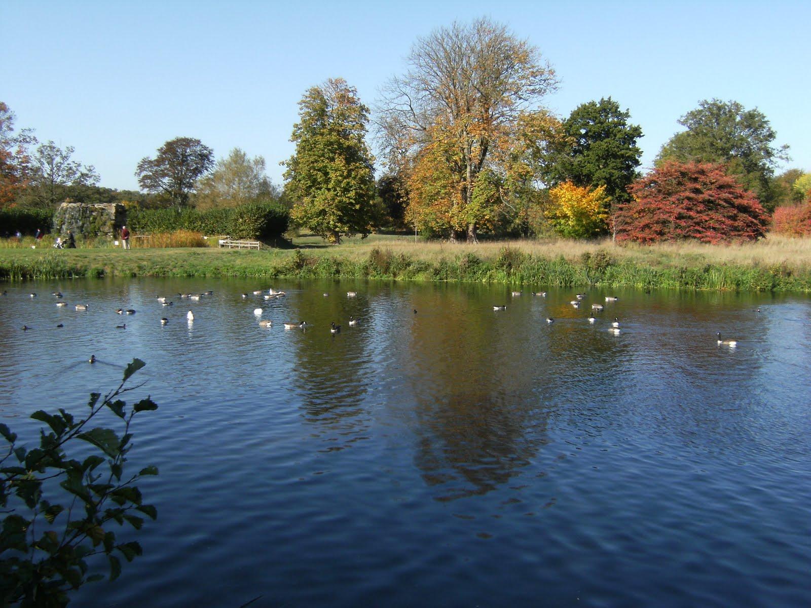 DSCF1990 Lake in Hever Castle gardens