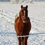 Winter - Winter-016.jpg