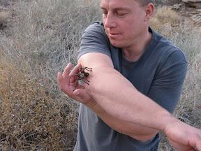 Jan has no fears of tarantulas and dared everyone else to man up :-)