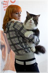 cats-show-24-03-2012-fife-spb-www.coonplanet.ru-068.jpg