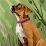Makanjuola Oluwafemi's profile photo