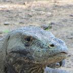 Komodo fotóalbum
