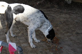 Other Ways We Help - Street Dogs