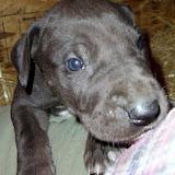 Cooper @ 4 weeks
