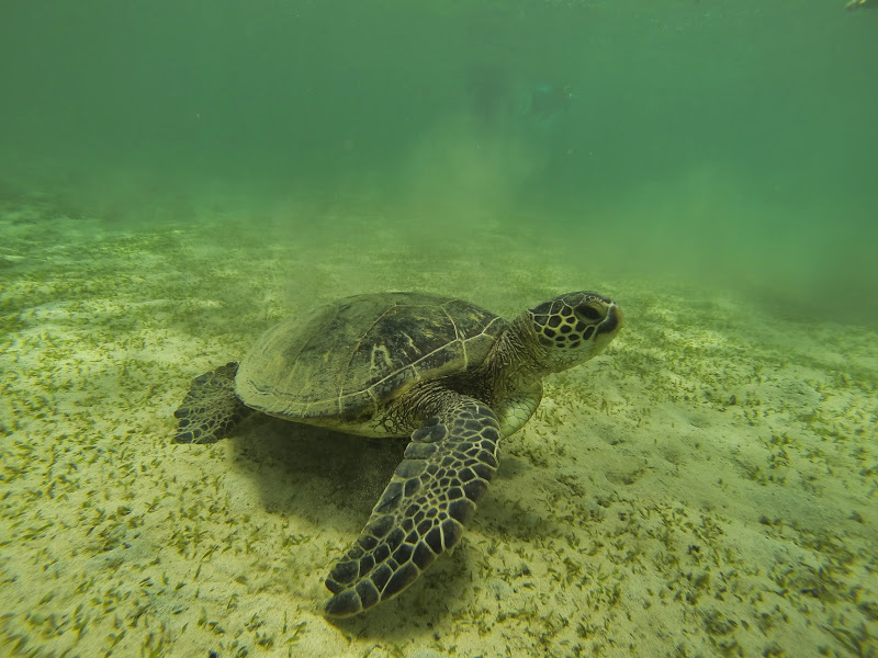 Hawaii 2013 - Best Story-Telling Photos - G0066484.JPG