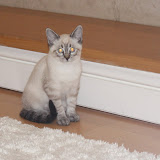 Sky Kitten - Rehomed UK